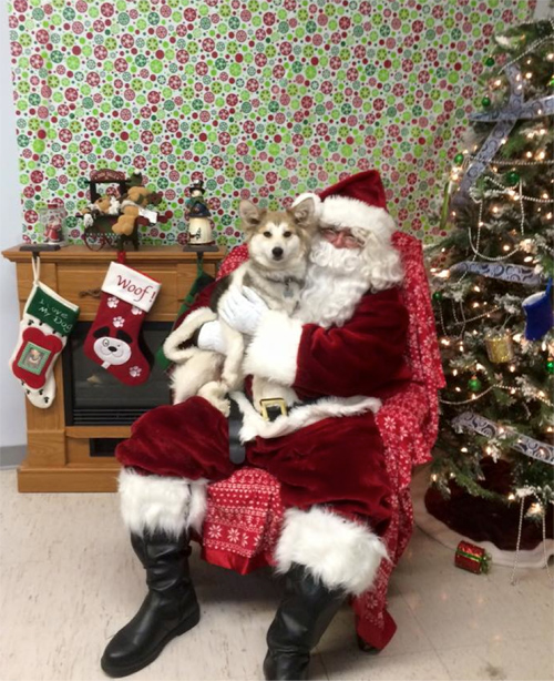 One of our rescue dogs sitting on Santa's lap