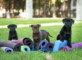 Puppy Yoga - The Barbell Academy
