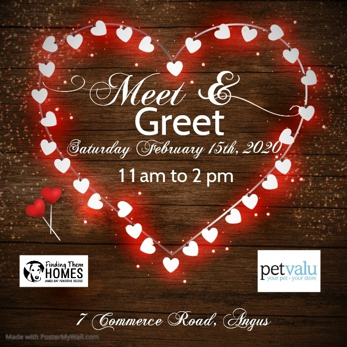 Angus PetValu Meet & Greet